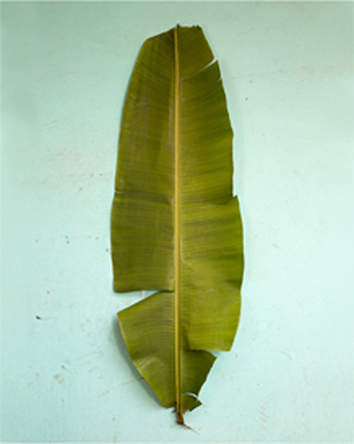 , 'Banana Leaf Scale,' 2014, galerie nichido / nca | nichido contemporary art