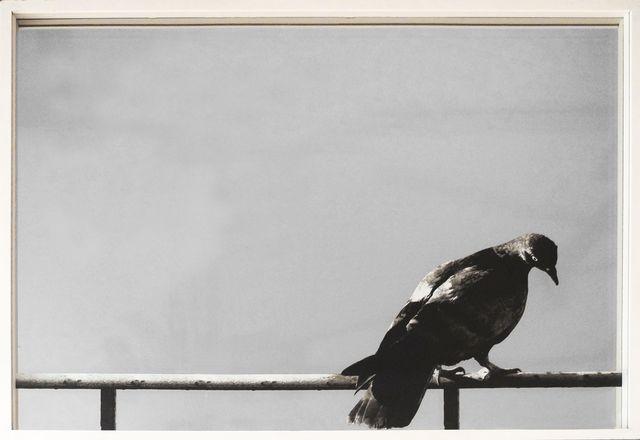 , 'Colomba (Dove),' 1974, Vivian Horan Fine Art