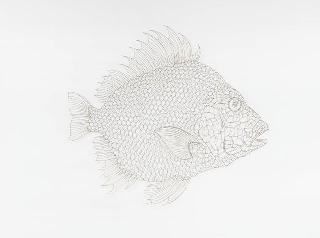 , 'The Fish 1310150,' 2013, Gallery Hyundai