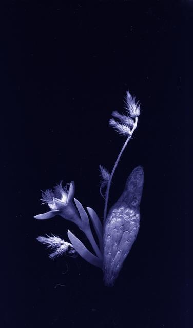 , 'flores nativias .2,' 2017, A.I. Gallery