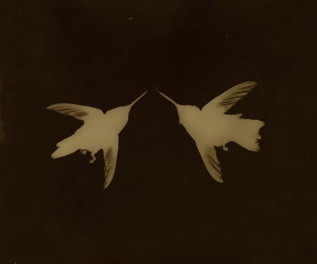 , 'Pair of Hummingbirds,' , photo-eye Gallery