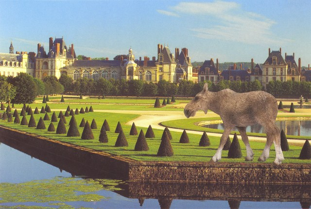 , 'Moose Cow at Fontainebleau,' 2013, Wilding Cran Gallery