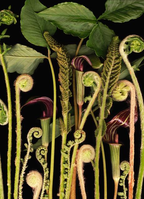 Lisa Frank, ' 1 image Woodland Night (Contemporary Digital Flora Still Life Print, Green on Black)', 2007, Carrie Haddad Gallery