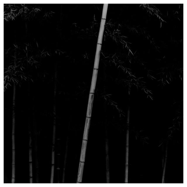Choi Byung-Kwan, 'Bamboo Square #12', 2013, ElliottHalls