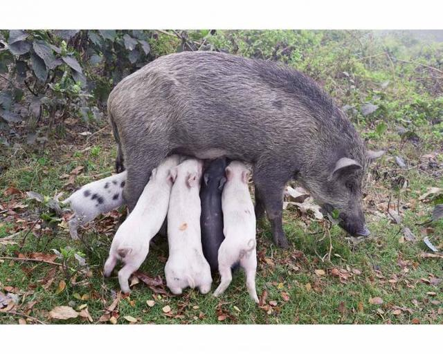 , 'Wildschweinmutter, Kolkata, India 2014,' 2014, ICA London