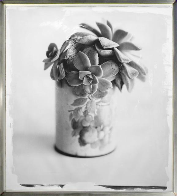 , 'Succulent,' 2010, HackelBury Fine Art