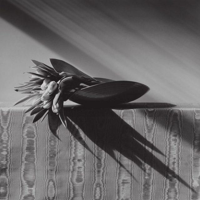 Robert Mapplethorpe, 'Tulips', 1988, Huxley-Parlour
