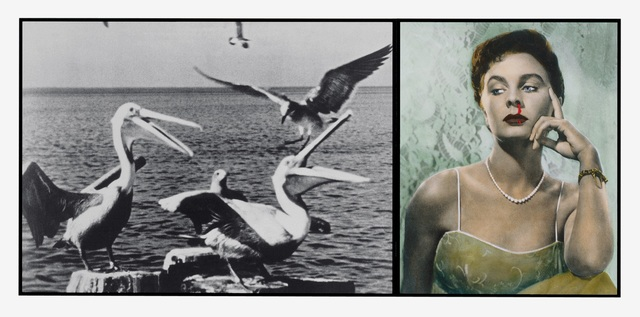 , 'Pelicans Staring at Woman with Nose Bleeding,' 1984, Vancouver Art Gallery