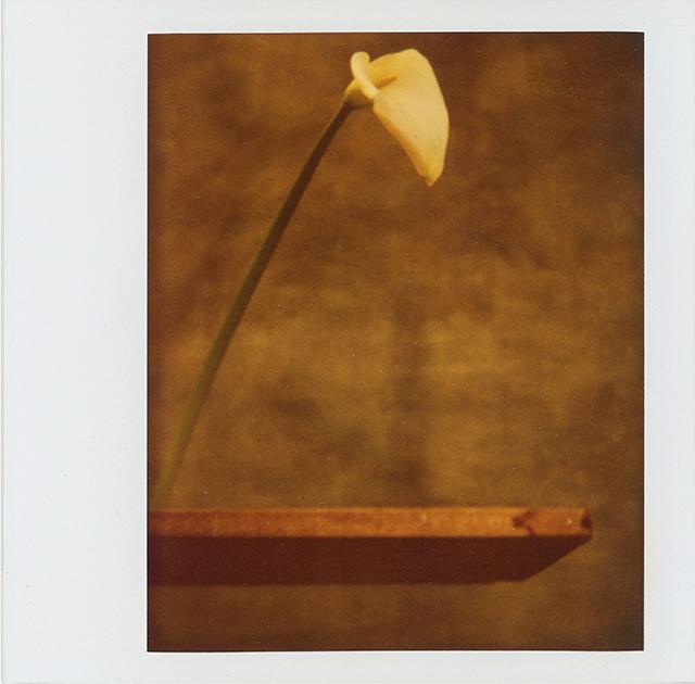 , 'Cala,' 1989, Vasari