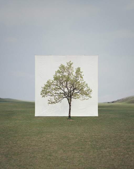 Myoung Ho Lee, 'Tree #14', 2009, Late Ninety