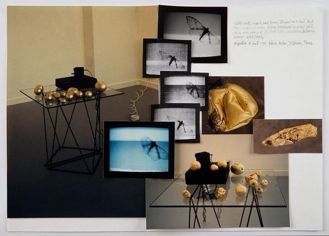 , 'Papillon de Nuit,' 1993, Richard Saltoun