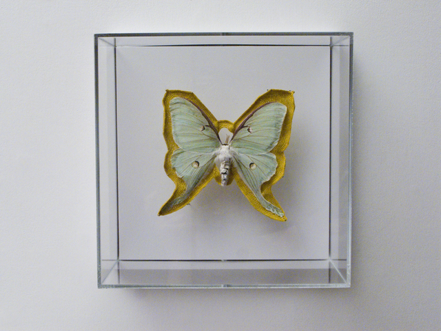 Esther Traugot, 'Luna Moth', 2019, Muriel Guépin Gallery