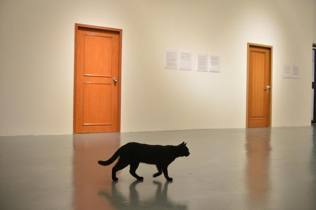 , 'Schrodinger,' 2015, MadeIn Gallery