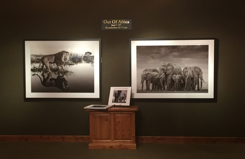 Out of Africa-David Yarrow