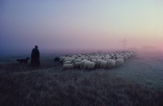 , 'Racka Flock, Hortobágy, Hungary,' , Pucker Gallery