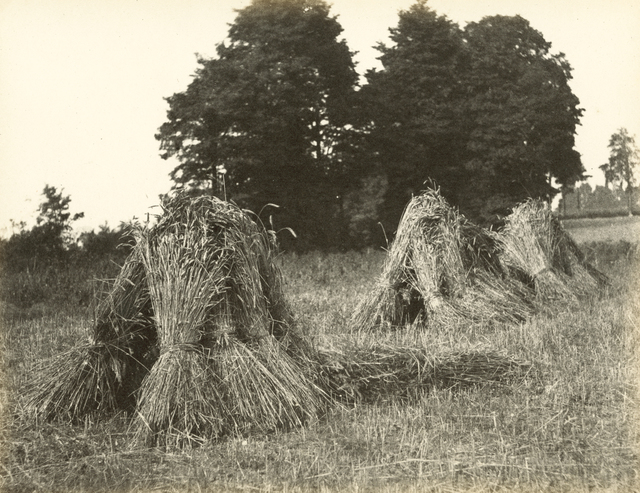 , 'Harvest scene with stooks and trees,' 1860-1870, Hans P Kraus Jr. Fine Photographs