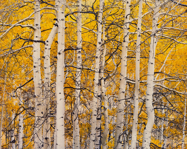 , 'High Mountain Aspen, Colorado,' 2016, Photography West Gallery