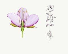 , 'Flora Generica,' 2017, Andra Norris Gallery