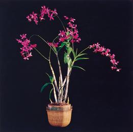 Robert Mapplethorpe, 'Orchids,' 1989, Phillips: Photographs (November 2016)