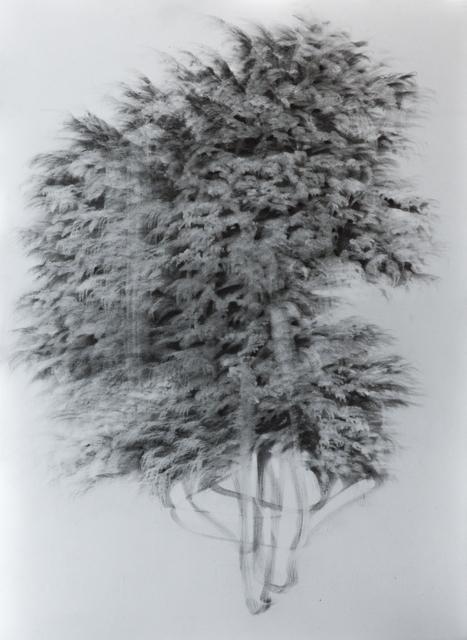 , 'g 19][84 d,' 2018, Massey Klein Gallery