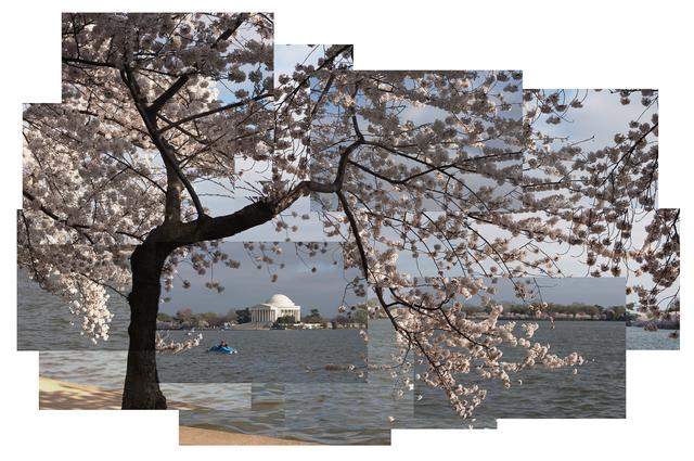 Jason Horowitz, 'Cherry Blossoms, Tidal Basin', ca. 2004, Curator's Office