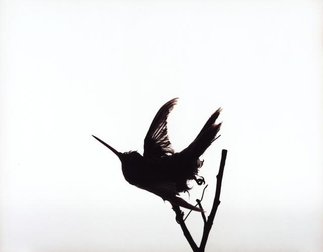 Katherine Wolkoff, 'Hummingbird', 2005, Benrubi Gallery