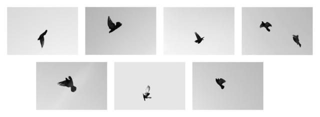 , 'SIGNAL ESCAPES,' 2017, Galerie Eva Presenhuber