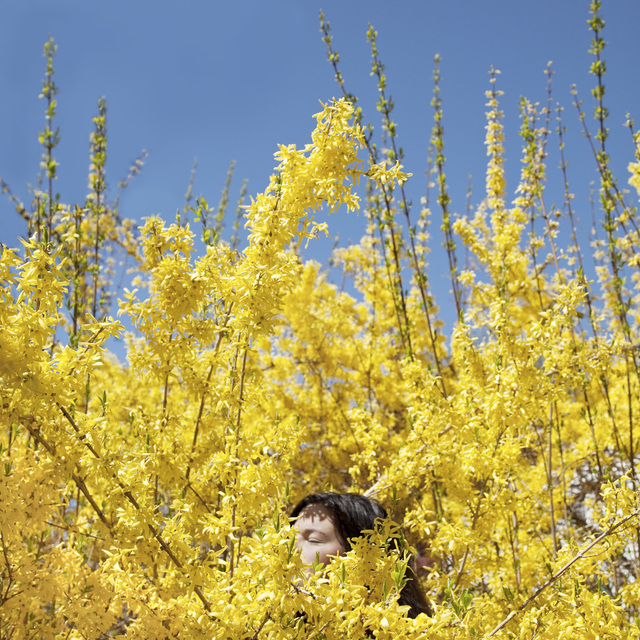 , 'Claire in the Forsythia,' 2010, Kopeikin Gallery