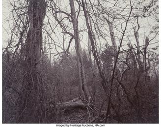 Woods (Belmont, Massachusetts) and Lightening (Nevada) (two photographs)