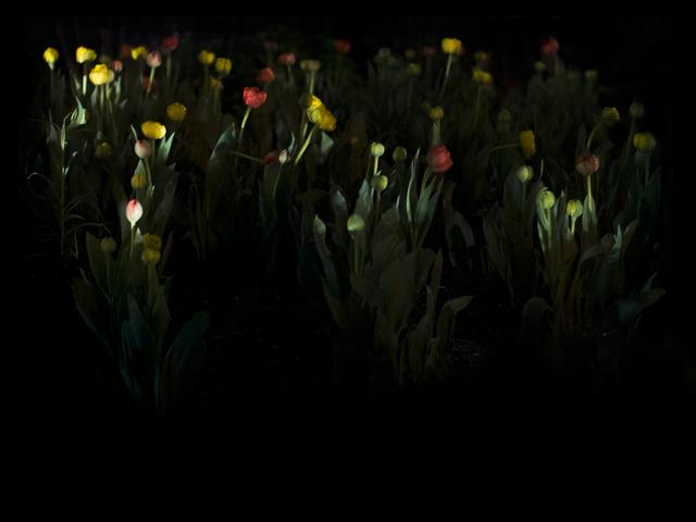 Anna Beeke, 'Midnight in the Garden #74', 2017, Uprise Art