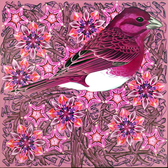 Kevin Veara, 'Exult #49 Purple Finch', 2019, Springfield Art Association