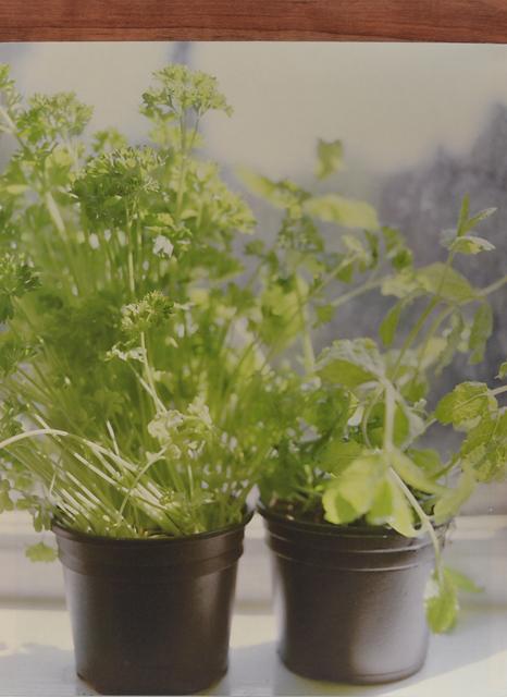, 'Herbs # 1,' 2014, Tatjana Pieters