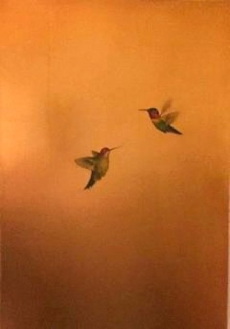 Carolyn Reynolds, 'Two Hummers in Golden Glow ', 2018, Dawson Cole Fine Art