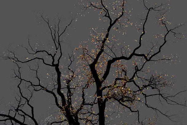 , 'No 15 from the series: Dark Trees,' 2016, Roya Khadjavi