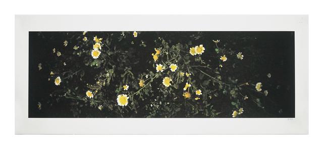 Lo Lai Lai Natalie, 'The Circadian Clock: Crown Daisy (I) no.1', 2018, Blindspot Gallery