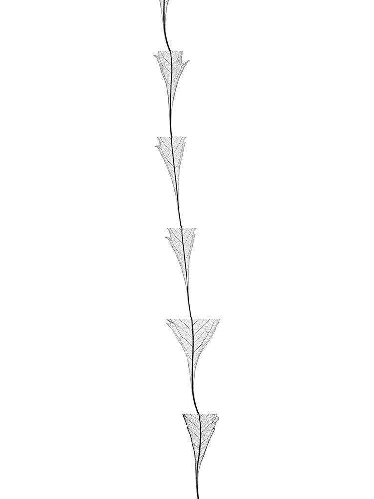 Poltrona Morgana Floral Bw Line.Https Www Artsy Net Artwork Tom Friedman Huddle Https