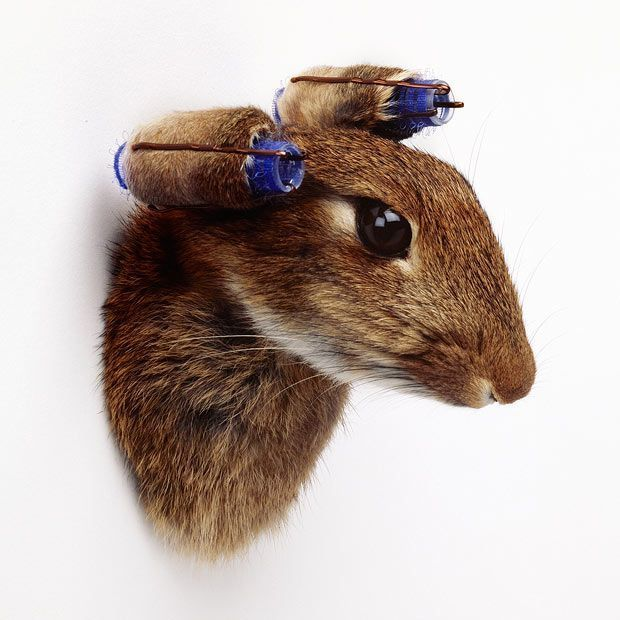 , 'Rabbit With Curlers,' 2012, Cob