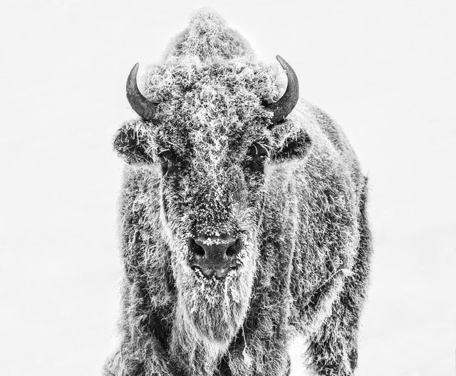 David Yarrow, 'Ice Age ', 2019, Maddox Gallery