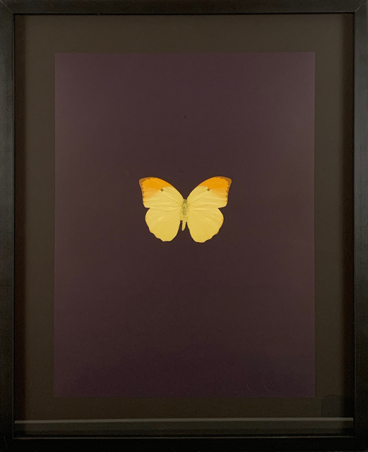 Damien Hirst, 'Six Butterflies IV', 2011, DTR Modern Galleries