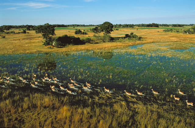 , 'Lechue, Okarango Delta, Botswana,' 2004, Anastasia Photo