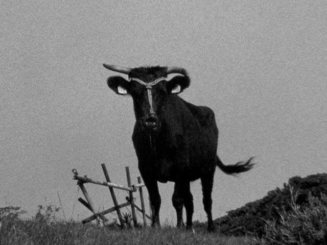 , 'Japanese Cattle,' 2015, Mori Art Museum