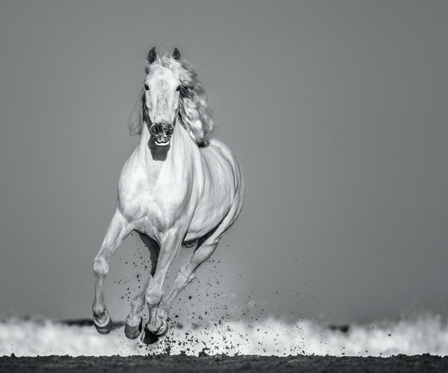 David Yarrow, 'Pegasus', 2020, Photography, Archival Pigment Print, Samuel Lynne Galleries