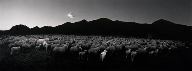 Pentti Sammallahti, 'Barun-Khemchik, Tuva, Siberia (Flock of Sheep and Goat)', 1997, ClampArt