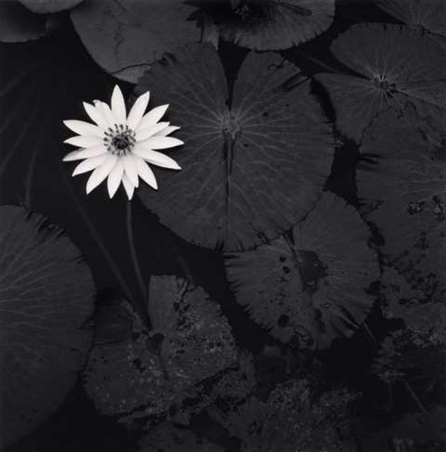 Michael Kenna, 'Mamtas Lotus Flower, Ban Viengkeo, Luang, Prabang, Laos.', 2015, Weston Gallery