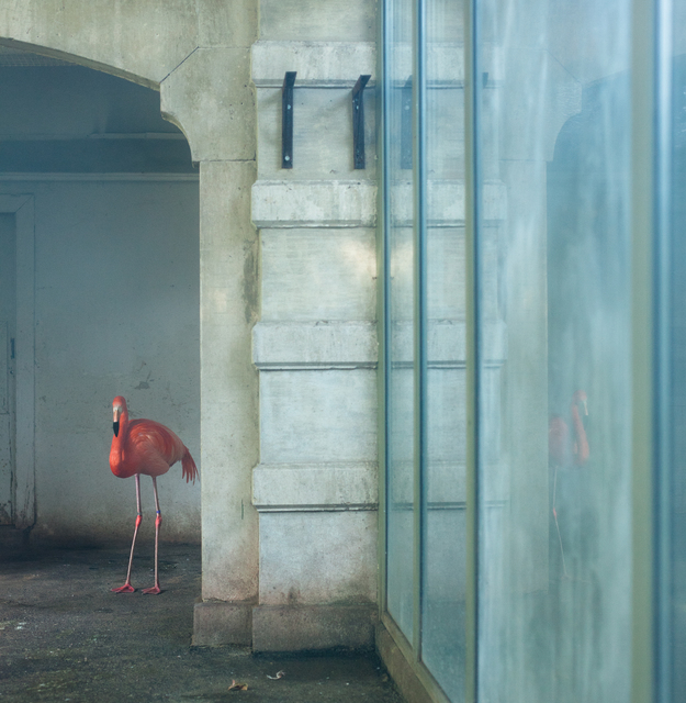 , 'Blue Flamingo,' , Galerie Dumonteil