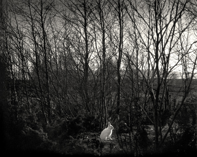 , 'Signilskär, Finland (white rabbit in forest),' 1974, Nailya Alexander Gallery