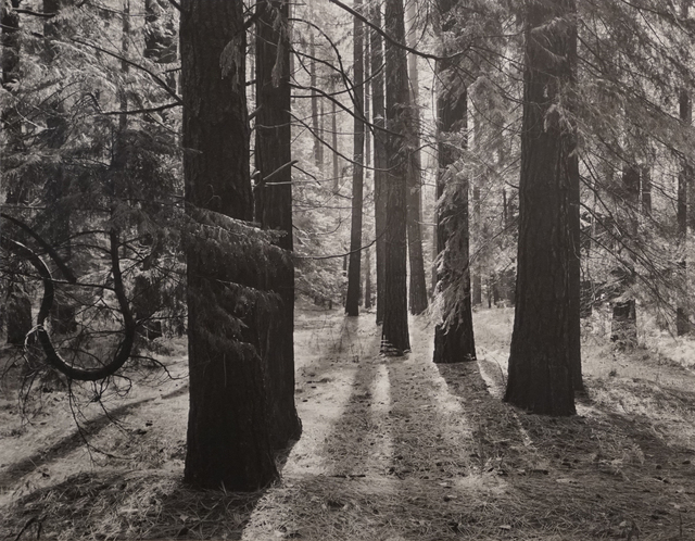 , 'Forest Floor, Yosemite Valley,' 1950, Photography West Gallery