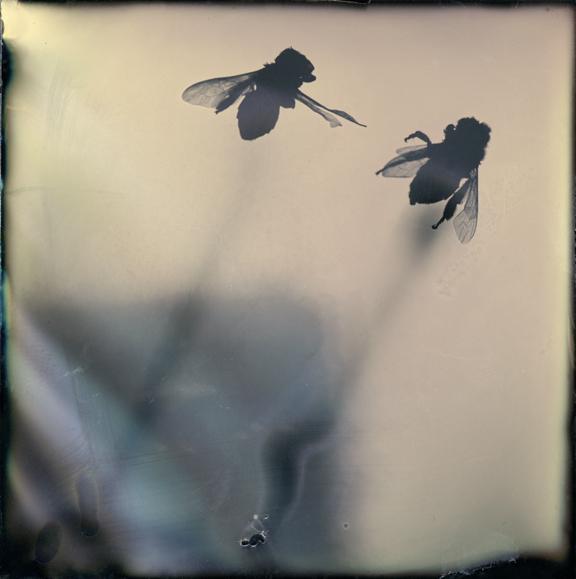 , 'Ascension,' , Walker Fine Art