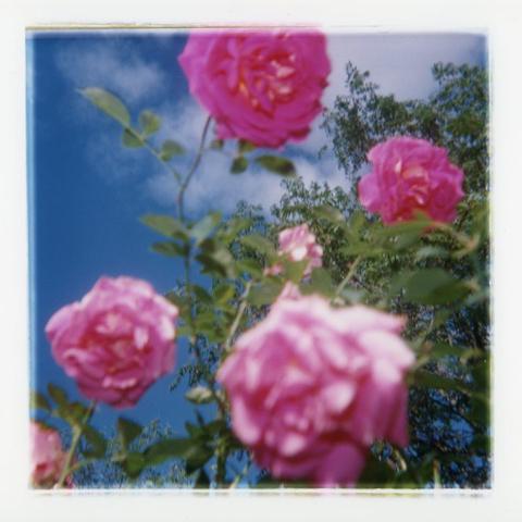 David Rasmus, 'Flower 208-10', 1997, Paul Petro Contemporary Art