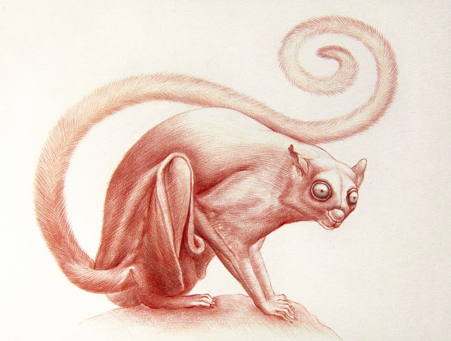 Jean Pierre Arboleda, 'Red Squirrel Study', 2019, Booth Gallery